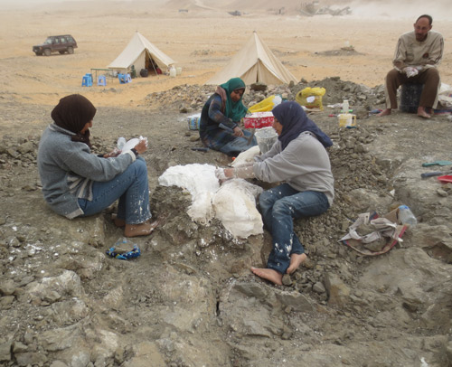 Egyptian scientists digging up the dinosaur's remains in the Dakhla Oasis.