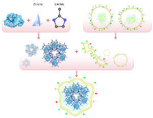 Nivolumab (blue blob) is loaded onto a metal organic framework made of zinc ions (pyramid) and 2-methylimidazole ligands (2-mIMs). Membranes from the targeted cancer cells (right) are used to coat the system (bottom).