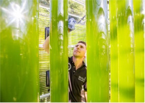 Researchers are growing microalgae in closed environments to produce biofuel