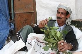 A man chews qat in Sana'a, Yemen.