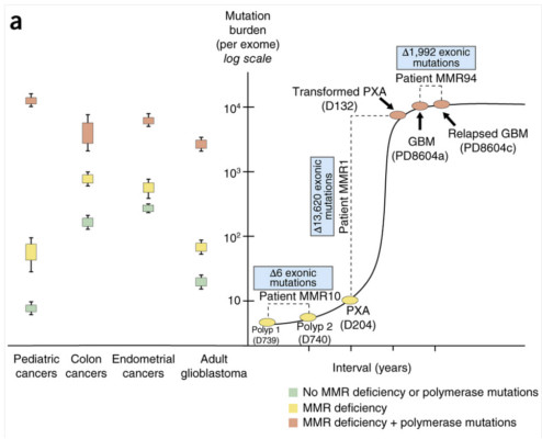 Mutation burden in pediatric and adult cancers with and without mutations in MMR genes and/or polymerase defects.